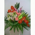 QF1150-Lilies Opening Flowers